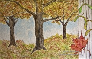 Kris Barlow, Sugar Maple