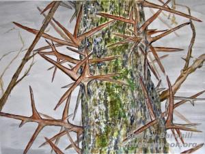 Shelley Barnhill, Locust